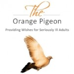 Orange Pigeon Gallery